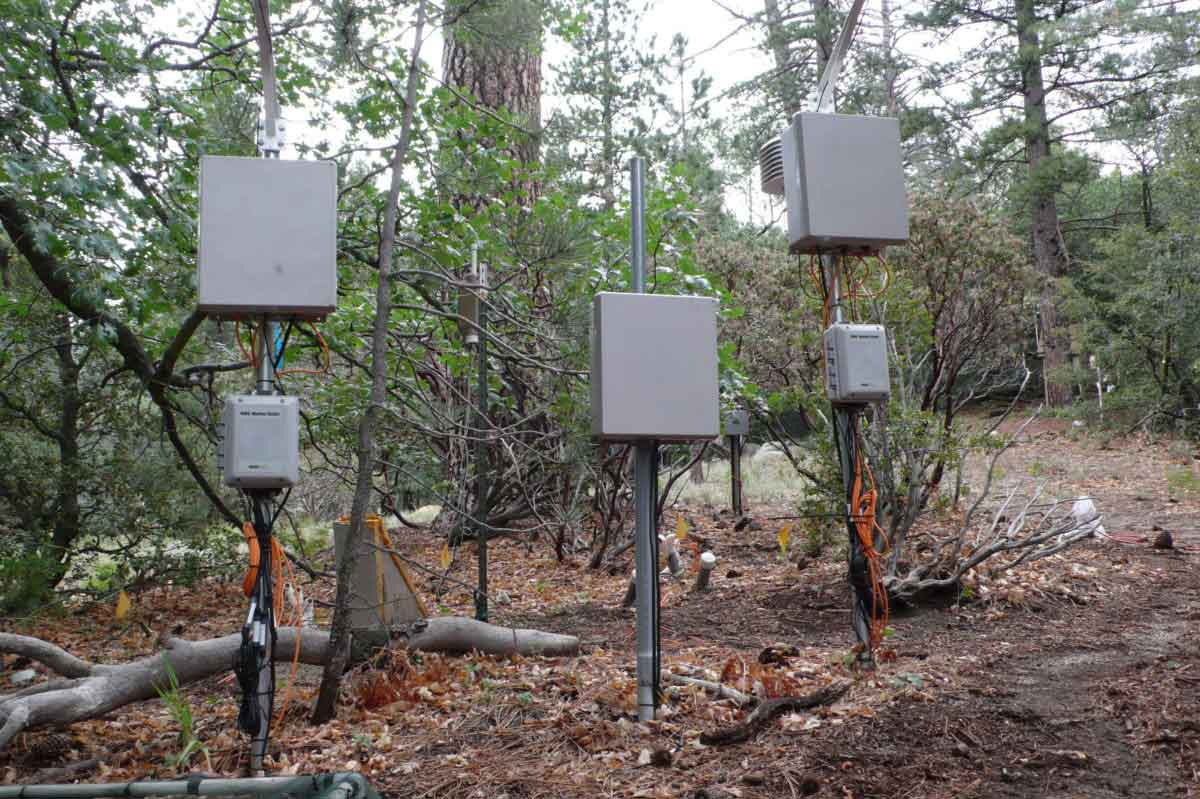Experimental forest with sensors, photo by author.